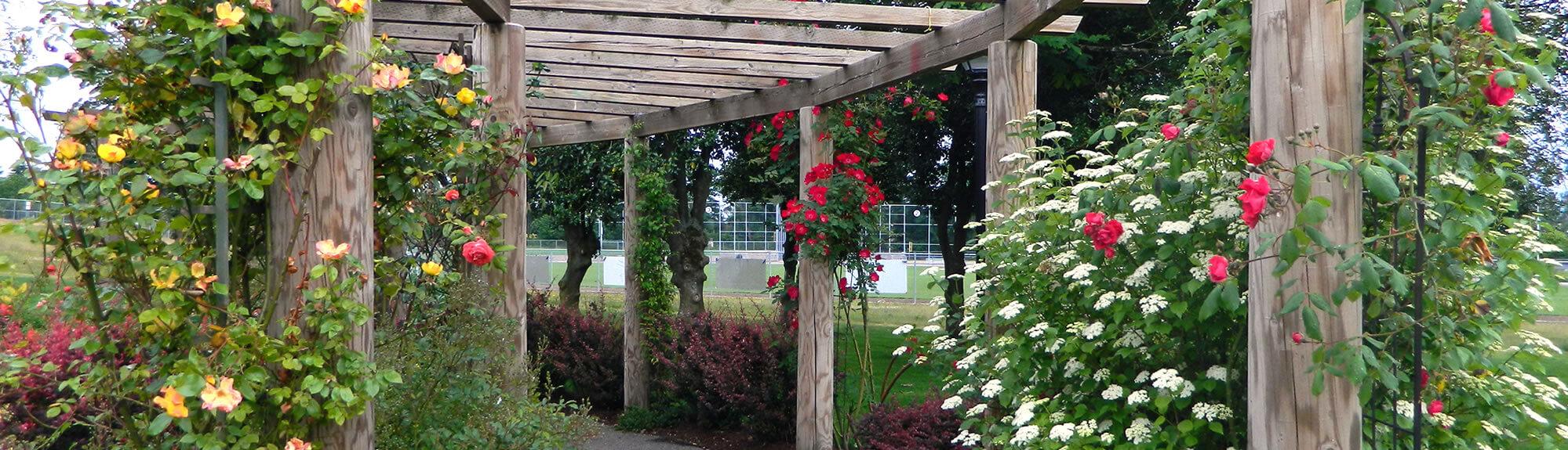 Activity Center - Mary's Rose Garden